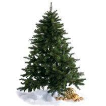 Sapins de Noël et arbres