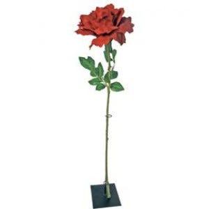 Fleurs et pétales Saint Valentin