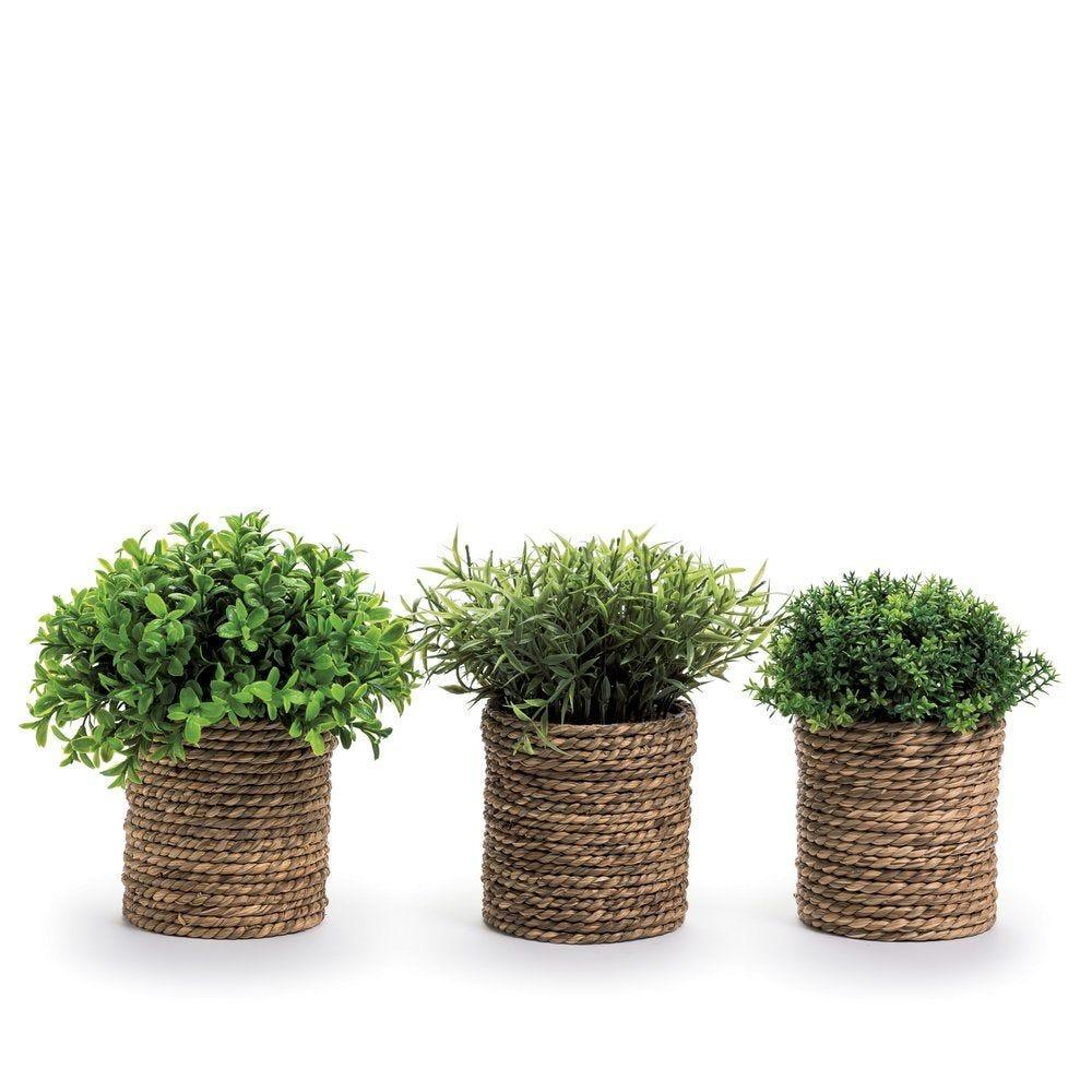 Aromates dans pot D 21 x H 22 cm - 3 modèles possibles (photo)