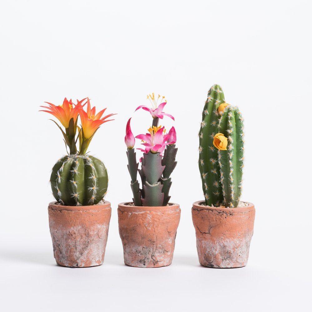 Cactus dans pot en terre cuite H 21 cm - 3 modèles au choix (photo)