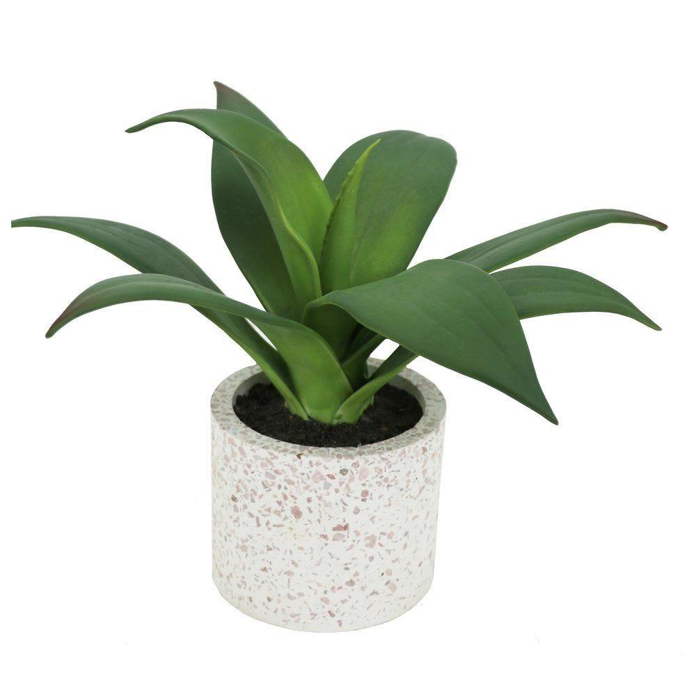 Agave dans pot ciment H 24 cm