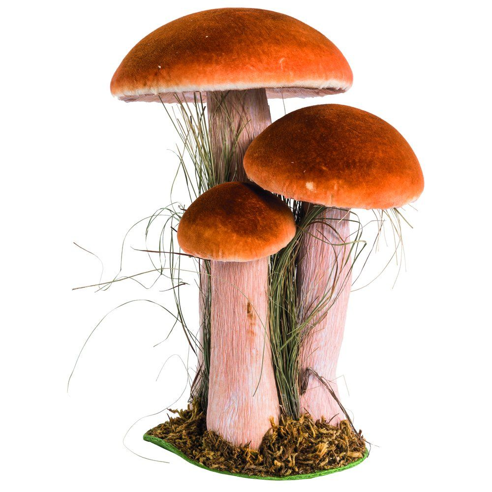 Champignon marron 3 têtes 15.5x19.5x27.5cm (photo)