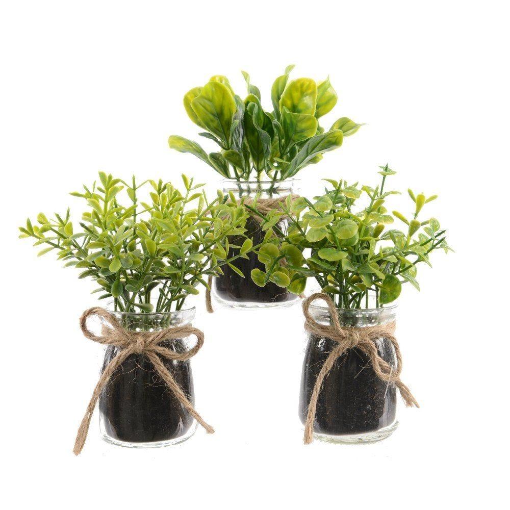 Herbe aromatique dans pot en verre 13cm - 3 modèles possibles (photo)