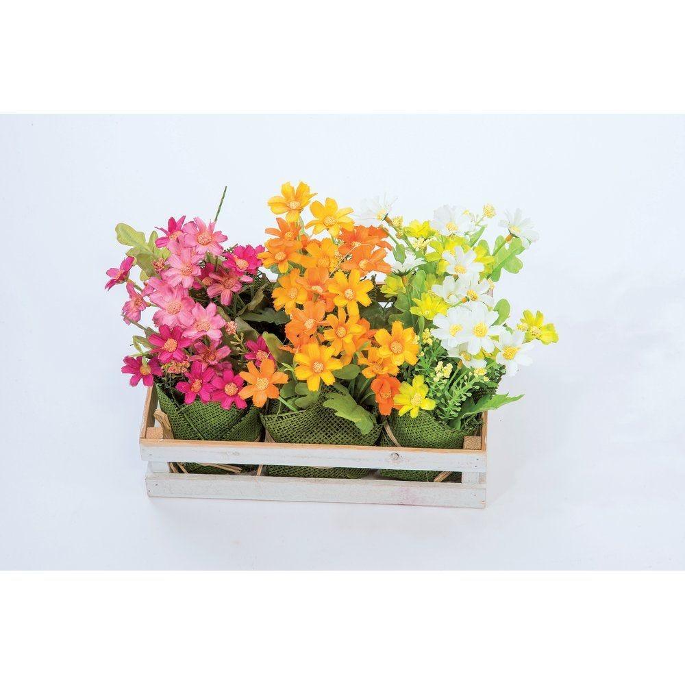 Plateau de 6 bouquets fleurs couleurs assorties h.16cm (photo)
