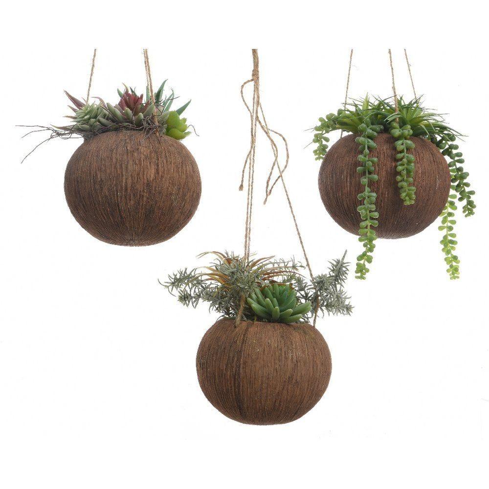 Plante grasse dans pot rond à suspendre Ø 16 x h.20cm - 3 modèles au choix (photo)