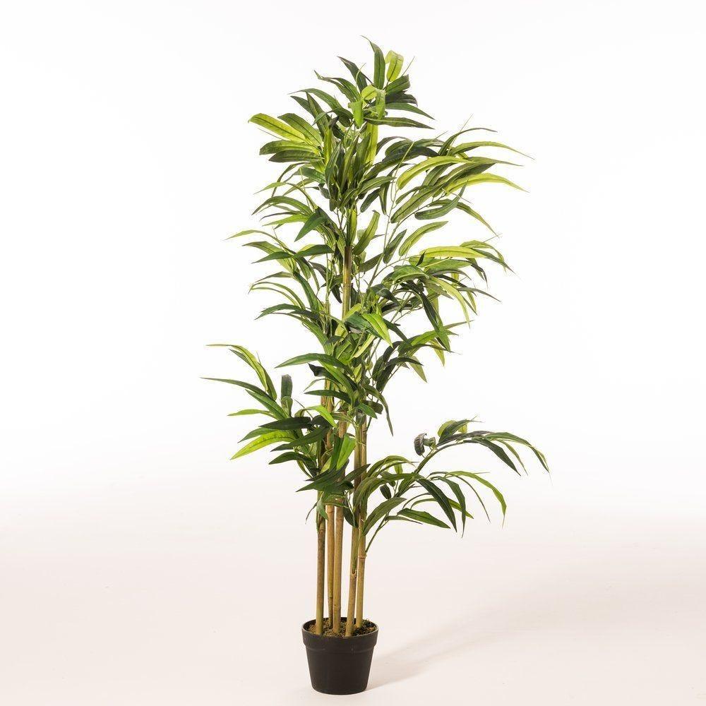 Bambou vert dans pot h.140cm (photo)