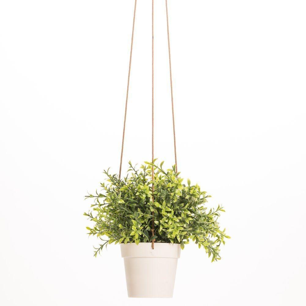 Plante verte à suspendre d.20 X h.25cm (photo)