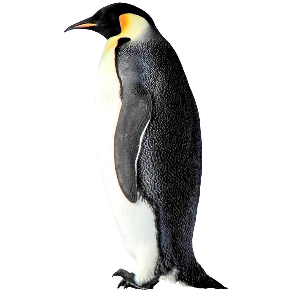Vitrophanie pingouin droit - 39 x 68 cm