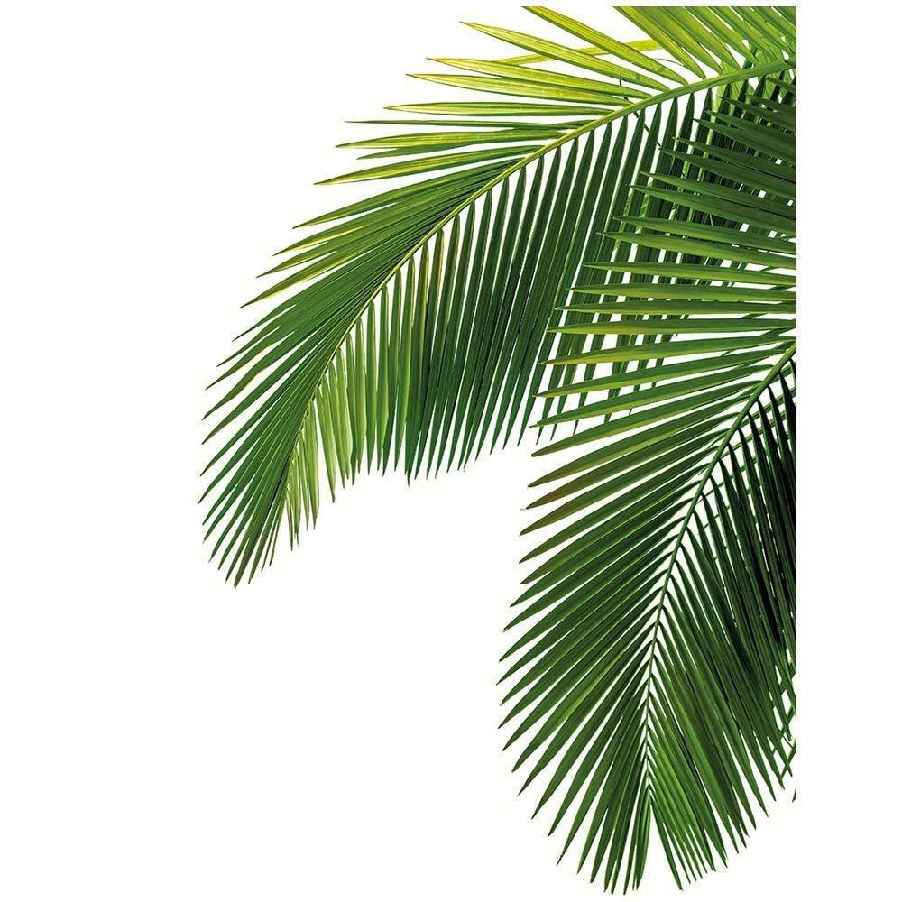 Vitrophanie feuilles de palmier - 66 x 98 cm