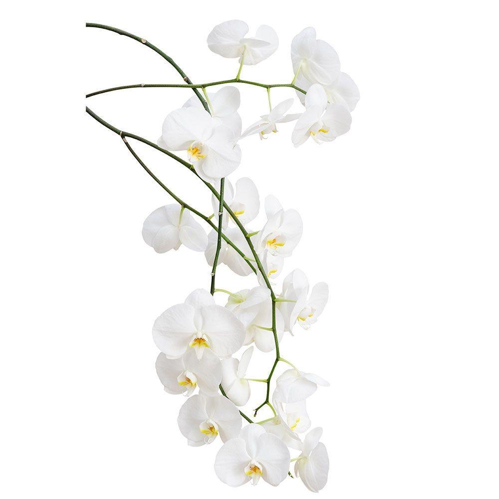 Vitrophanie branche d'orchidée - 56,7 x 98 cm