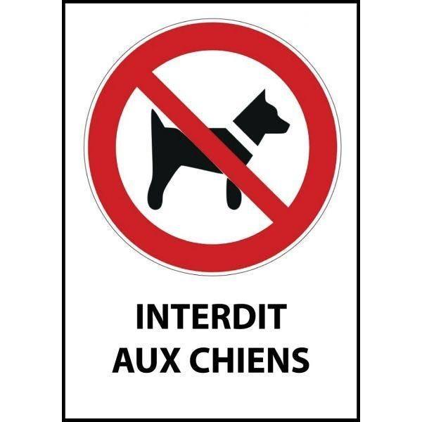 Panneau 'interdit aux chiens' p021 a4 pvc dos adhésif